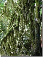 Hon Rainforest (24)