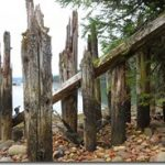 cannery pilings