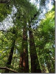 Navarro River Redwoods State Park (2)